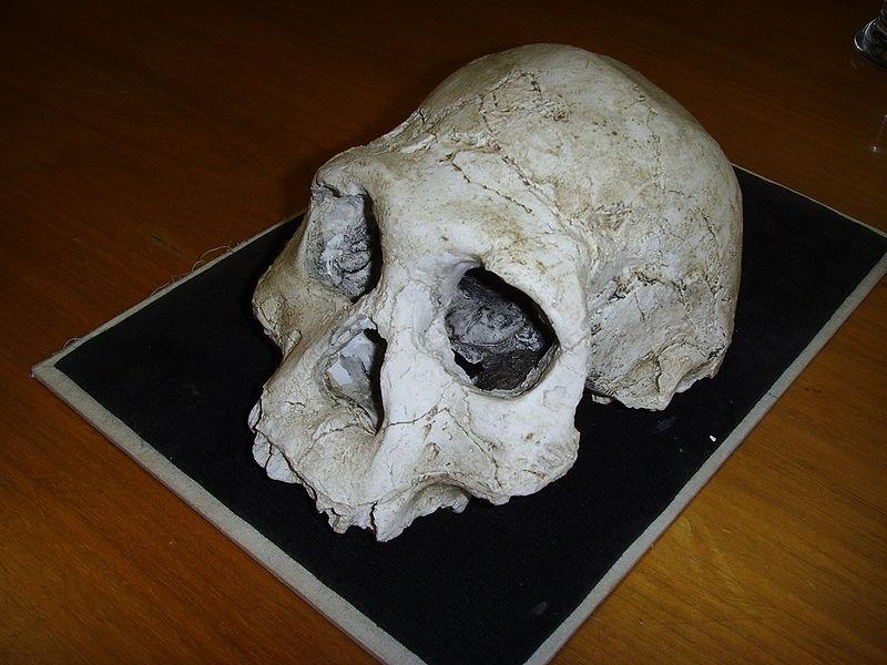 lucy australopithèque au ce2